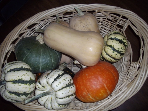 Growing winter squash to feed your tribe through the winter