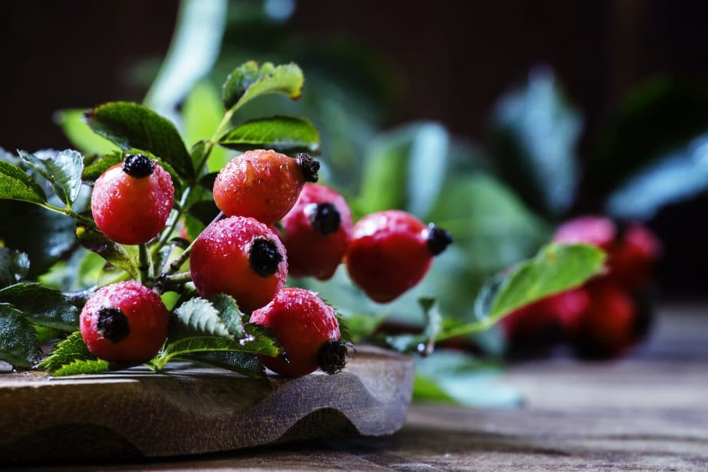 fresh rosehips on a wooden table, rosehip vitamin c is a great home immune booster.
