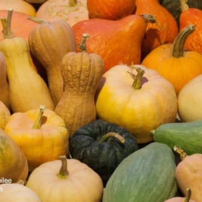 Growing Squash to Feed Your Tribe Through the Winter