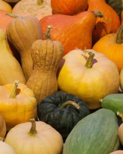 The squash plant is easy to grow. With proper pollination, it can feed your tribe all winter, and provide seeds for the next season. Learn how to do it.
