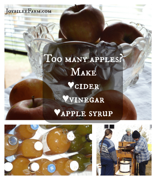 Collage of a bowl of apples, bottles of apple cider and an apple press