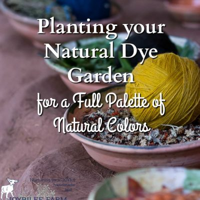 Planting your Natural Dye Garden for a Full Palette of Natural Colors