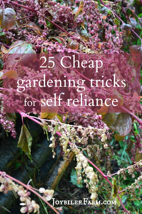 orach plants in seed with the text 25 Cheap Gardening Tricks for Self-Reliance