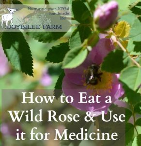 How to Eat a Wild Rose:  Roses for food and medicine