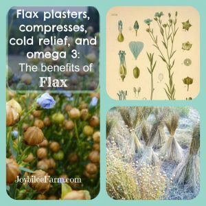 Flax plasters, compresses, cold relief, and omega 3:  The benefits of Flax (and a blog celebration)