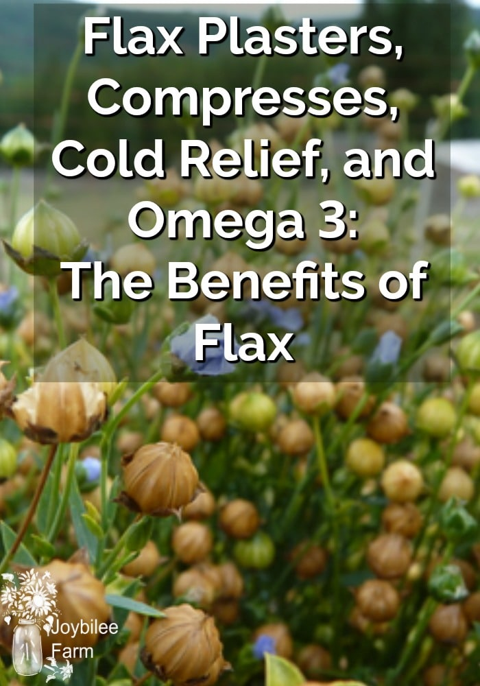 Flax Plasters, Compresses, Cold Relief, and Omega 3: The Benefits of Flax