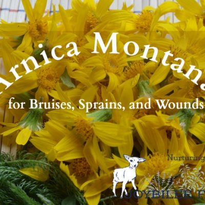 Arnica Montana for Bruises, Sprains, and Wounds