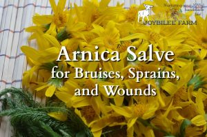 DIY Arnica Salve to Soothe the Bruises and Strains of Your Active Lifestyle