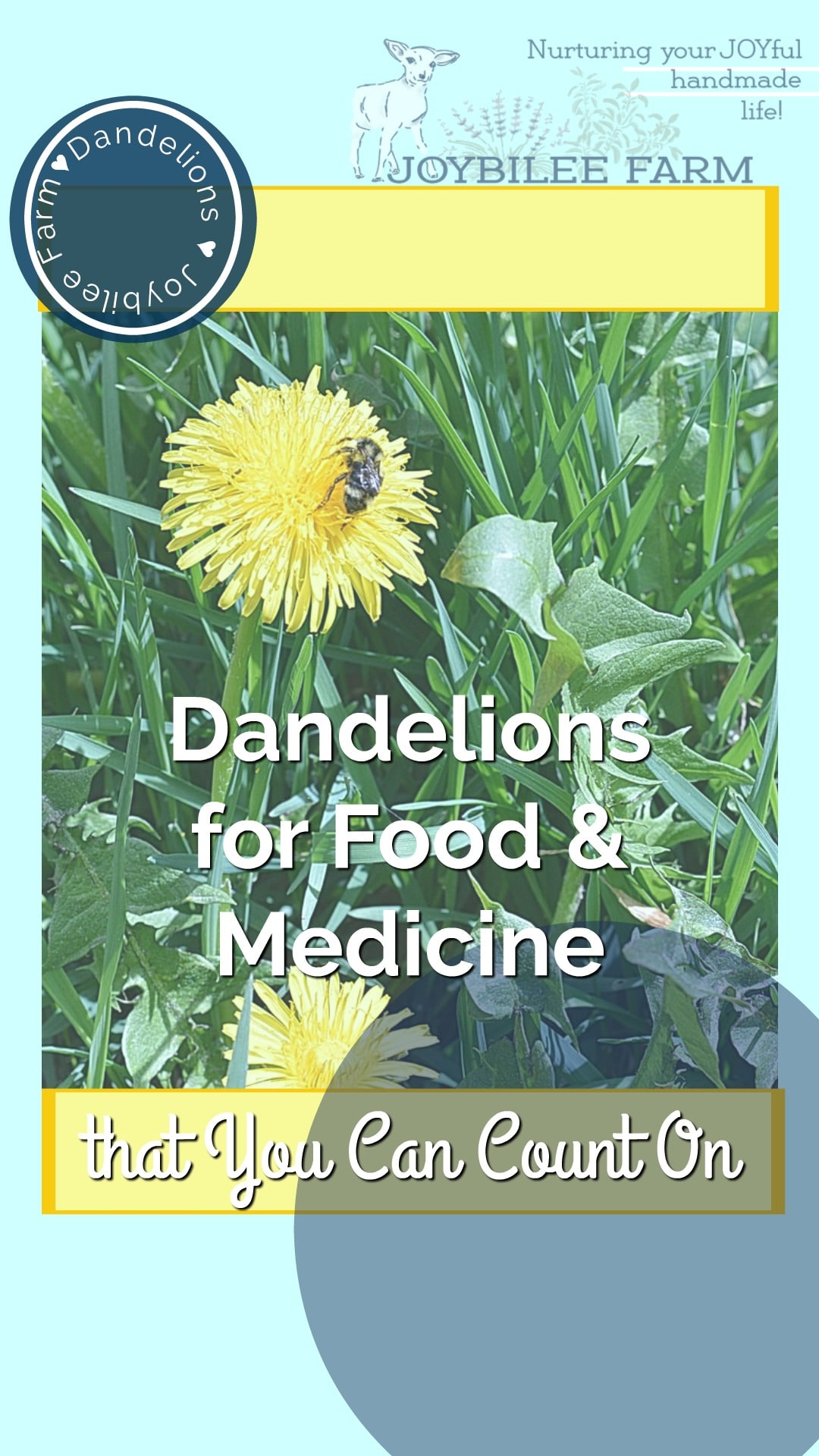 """dandelion with a bee on it and the text """"dandelions for food and medicine tht you can count on"""""""