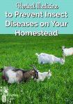 Goats grazing in green grass