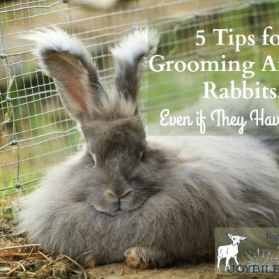 5 Tips for Grooming Angora Rabbits, Even If They Have Matts
