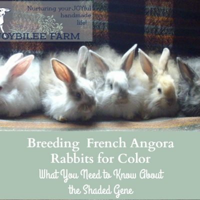 Angora rabbit 101:  Bunny Colour Genetics part 3, the shaded genes