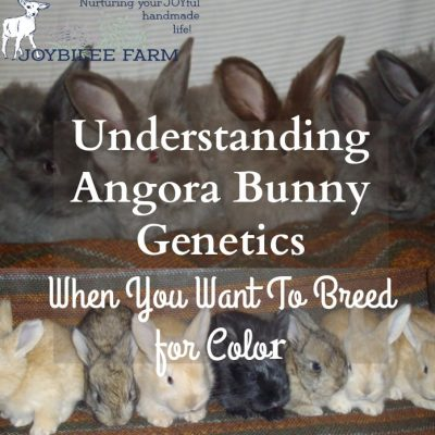 Understanding Angora Bunny Genetics When You Want To Breed for Color