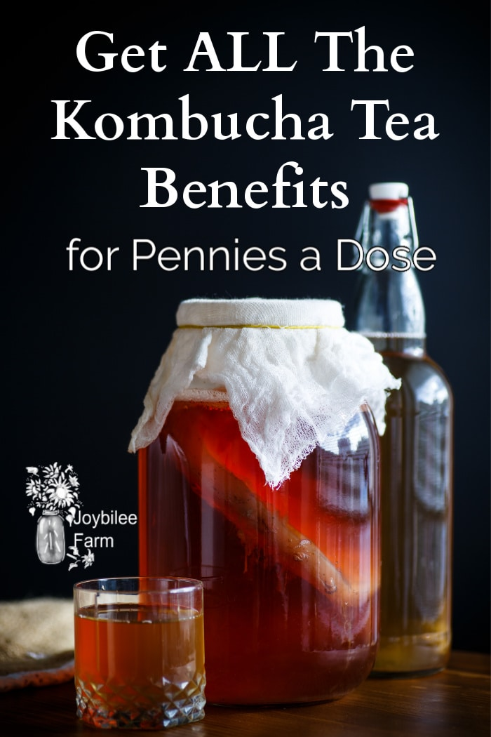 kombucha brewing, in a glass bottle, and in a cup on a dark background