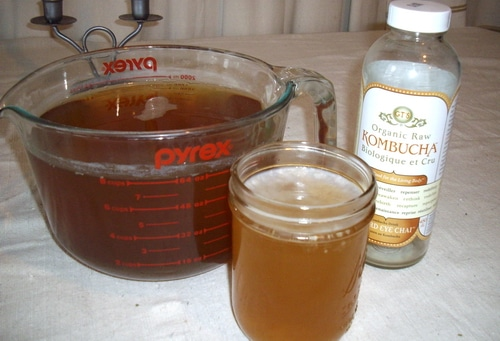 When troubleshooting kombucha problems it's important to know what healthy kombucha is supposed to be like. Using your senses and observation you'll be able to know that your kombucha is safe and healthy.