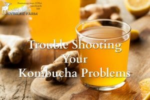 Troubleshooting Your Kombucha Problems