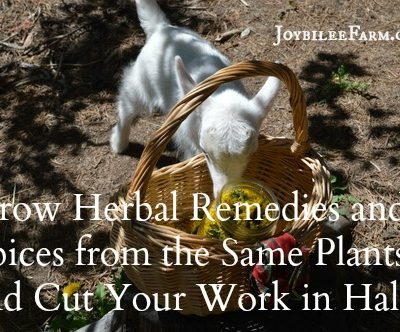 10 Herbal Remedies that are also Culinary Herbs