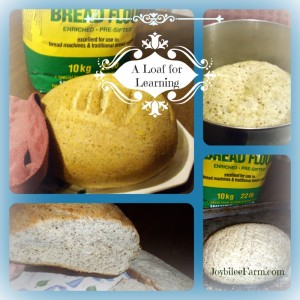 Lesson 1: A loaf for learning – Wheat breads