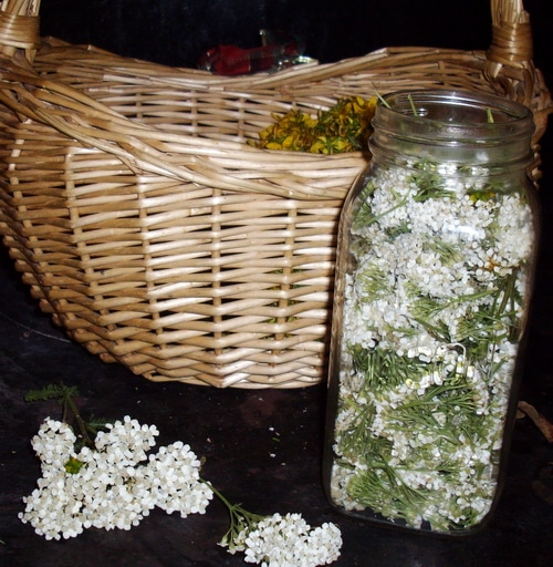 a basket containing st. john's wort flowers, and a jar filled with yarrow blossoms
