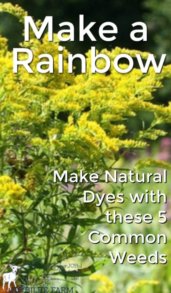 Make a rainbow of color using common weeds as natural dyes. With a little coaxing and time, these five weeds offer beautiful, vibrant colour variety and colourfastness.