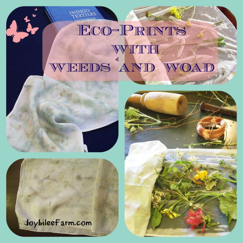 Making Eco-prints with woad and weeds