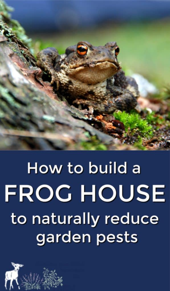 Attracting Frogs To Your Yard