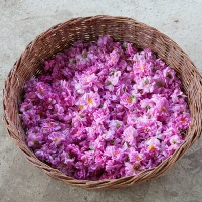 Make Rose Honey While the Rose Petals are Abundant