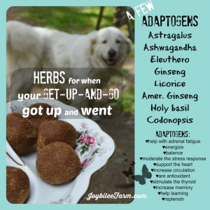 Zoom balls on a decorative plate and a dog in the background with a sidebar about adaptogens and their benefits.