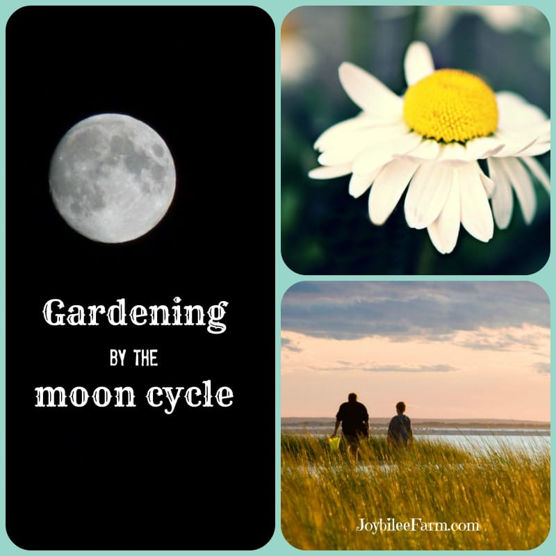 an image of the moon, an image of a daisy, and an image of two people facing away with grass between you