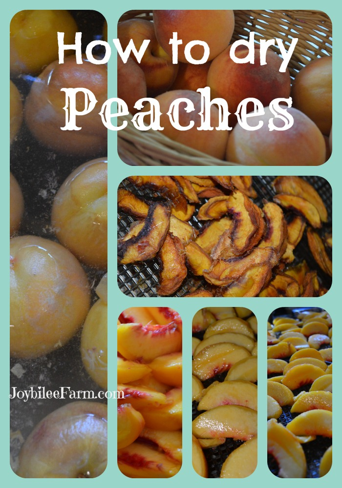 Photo collage of peaches - whole, sliced, dehydrated.