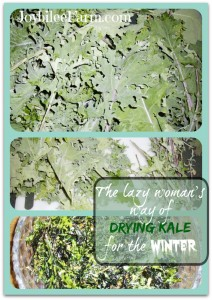 Photo collage of drying kale