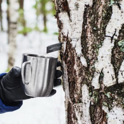 How to Make Birch Syrup, Even if You Have No Maple Trees