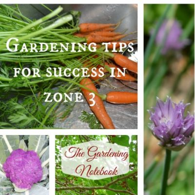 Gardening Tips for Success in Zone 3: 20 Vegetables You Can Grow