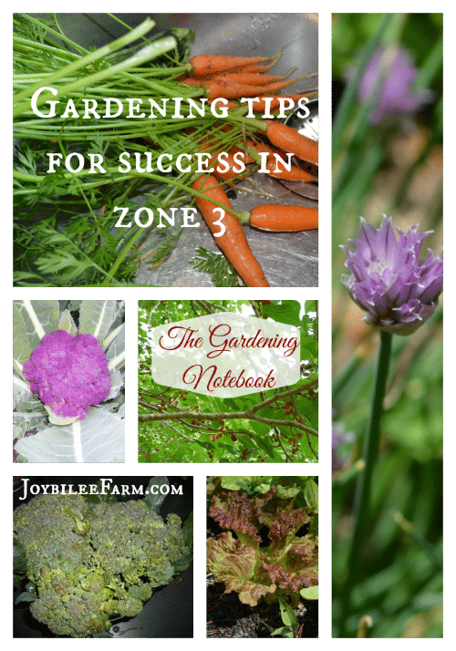 "a collage of carrots, purple cauliflower, green broccoli, lettuce, and a chive flower with the text ""Gardening tips for success in zone 3"""