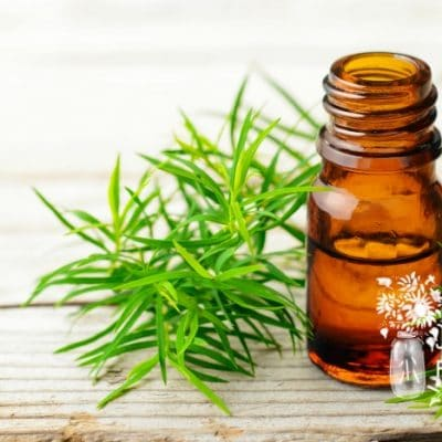 21 Ways to Use Tea Tree Oil Safely and Effectively on Your Homestead