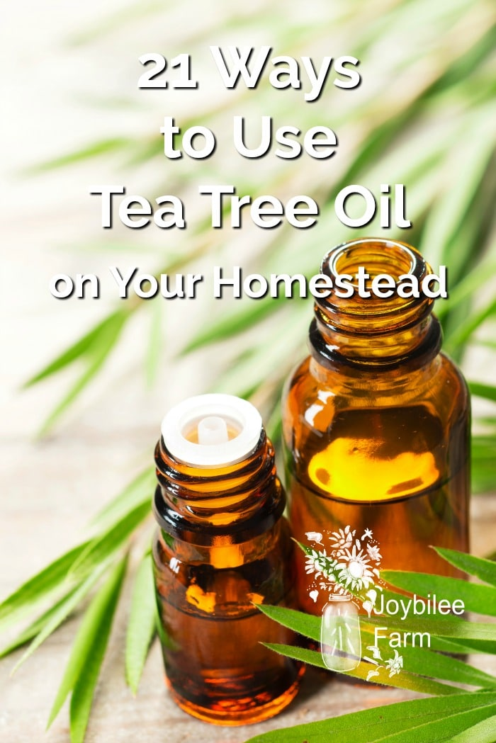 21 Ways To Use Tea Tree Oil On Your Homestead