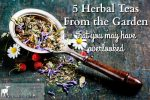 5 Herbal Teas From the Garden that You May Have Overlooked