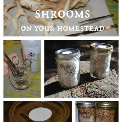 How to grow shrooms on your homestead
