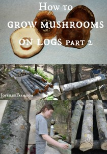 How to grow mushrooms on logs – part 2