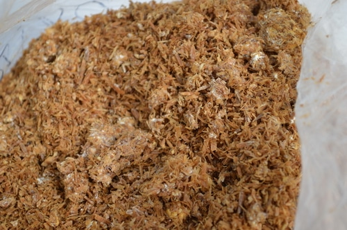 mushroom spawn in sawdust