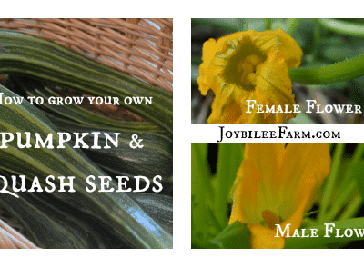 How to grow your own pumpkin seeds, zucchini seeds, and squash seeds