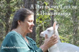 "Real Life Homesteading — the Answer to ""And what did YOU do today?"""