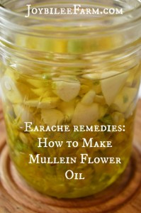 Earache remedies – How to Make Mullein Flower Oil