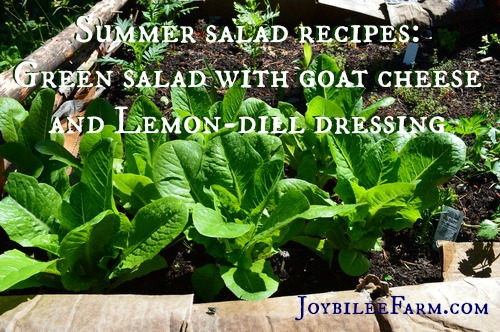 Summer salad recipes green salad with lemon dill dressing -- Joybilee Farm