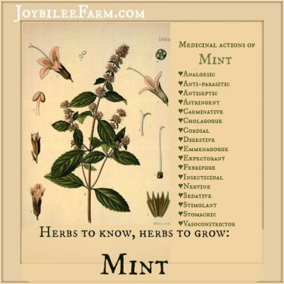 Herbs to Know, Herbs to Grow: Peppermint