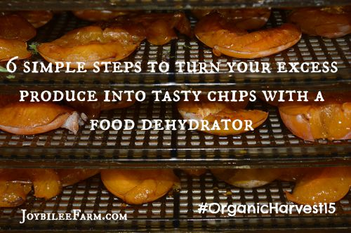 6 simple steps to turn your excess produce into tasty chips with a food dehydrator -- Joybilee Farm