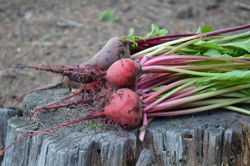 Organic gardening: Know when to harvest these 25 organic vegetables -- Joybilee Farm