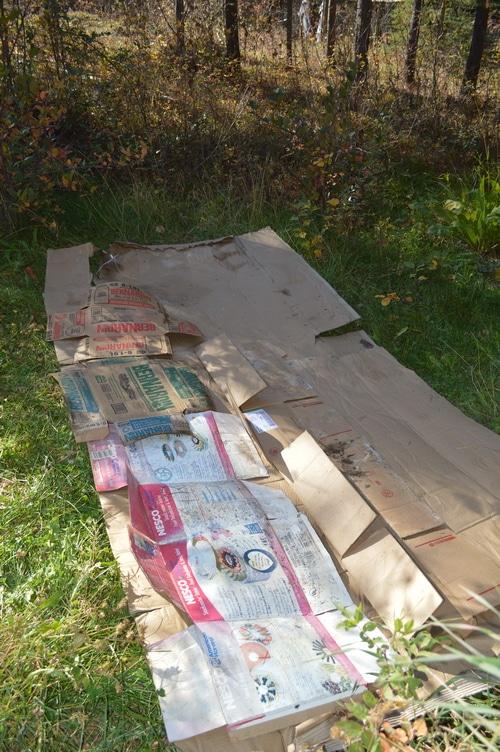 Sheet mulching to build new top soil