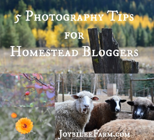 5 Photography Tips for Homestead Bloggers -- Joybilee Farm