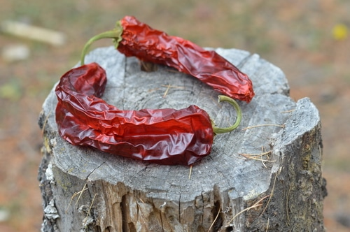 turning up the heat in your hot sauce recipes -- Joybilee Farm